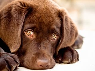 puppy_dog_muzzle_81750_320x240