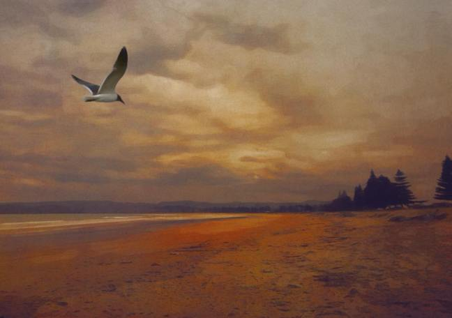 Seagull gliding across the sands