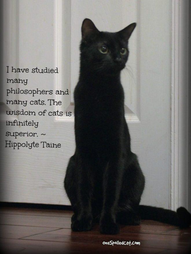 cat_wisdom