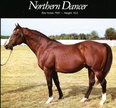 Northerndancer2